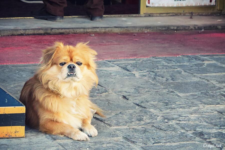 2015.12.09   Tibet 西藏踢北去   尋找藏人真正的拉薩中心,被信仰力量震撼的大昭寺與舊城區 02.jpg