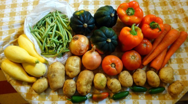 Homestead Creamery Week 22 Vegetable Delivery