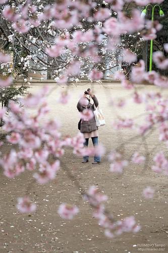 寒桜とカメラ女子 20170315-DSCT3794 (2)