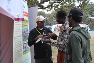 Festo Ngulu (left), Africa RISING research coordinator for Babati District, explains the projects' interventions on aflatoxin mitigation to farmers visiting the project exhibition stand during the nane nane agricultural fair in Arusha, Tanzania