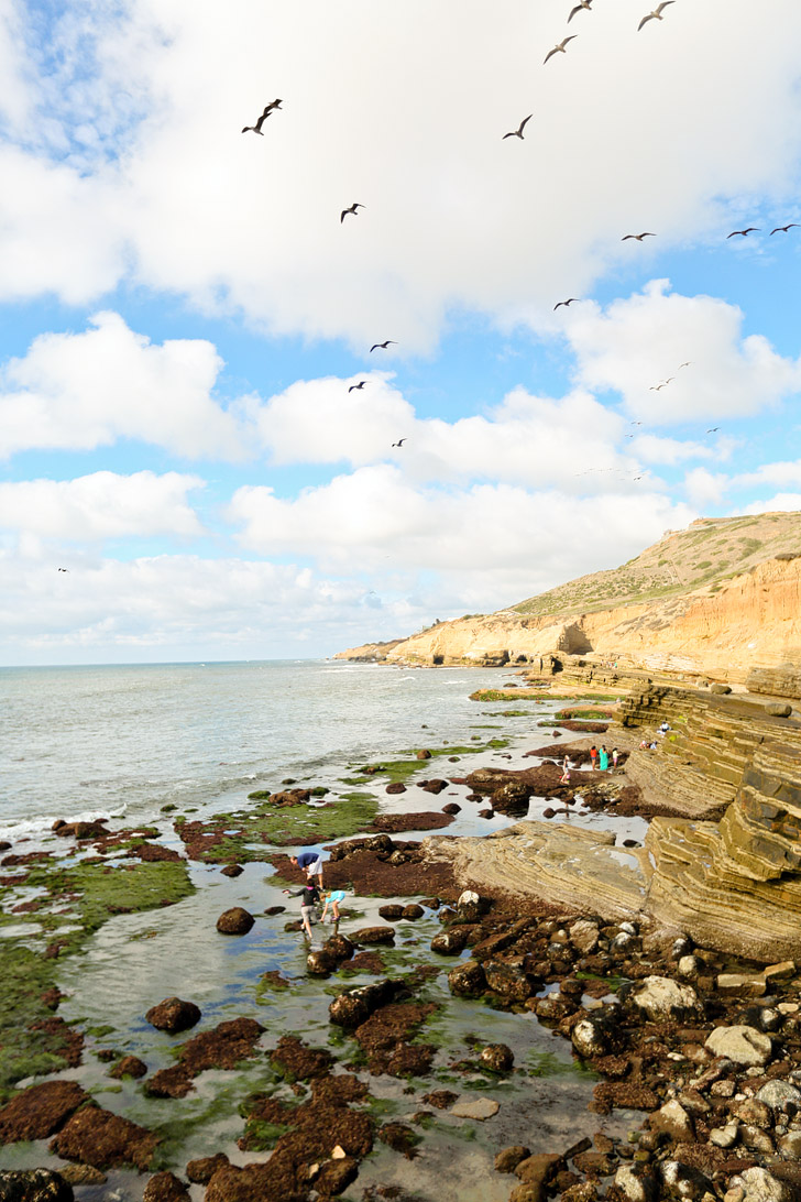 Tide Pooling - Discovering Fascinating Sea Life at San Diego Tide Pools / Cabrillo National Monument.