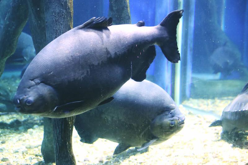 Fish at the oceanarium