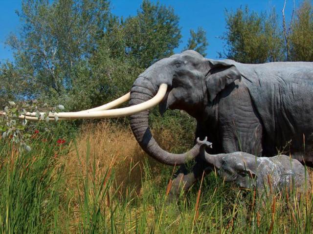 rinelefante