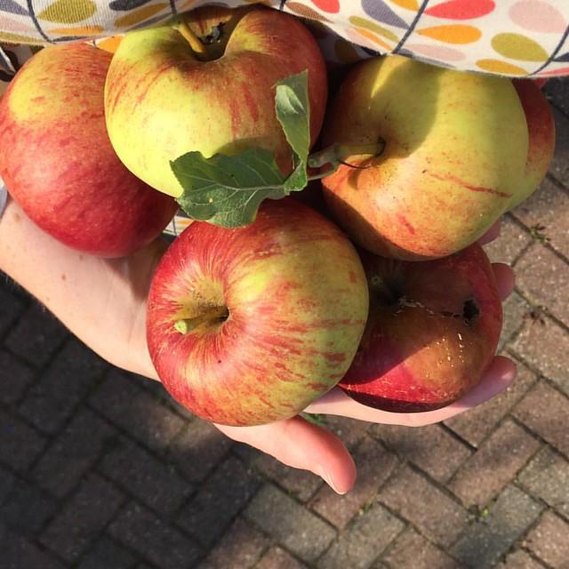Apples #nofilter