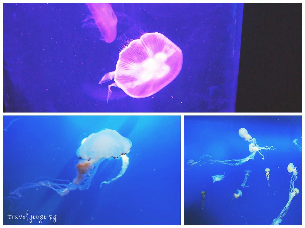 travel.joogo.sg - SEA Aquarium 13
