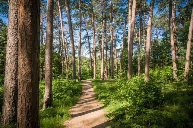 Through the Woods - Preachers Grove in Itasca State Park