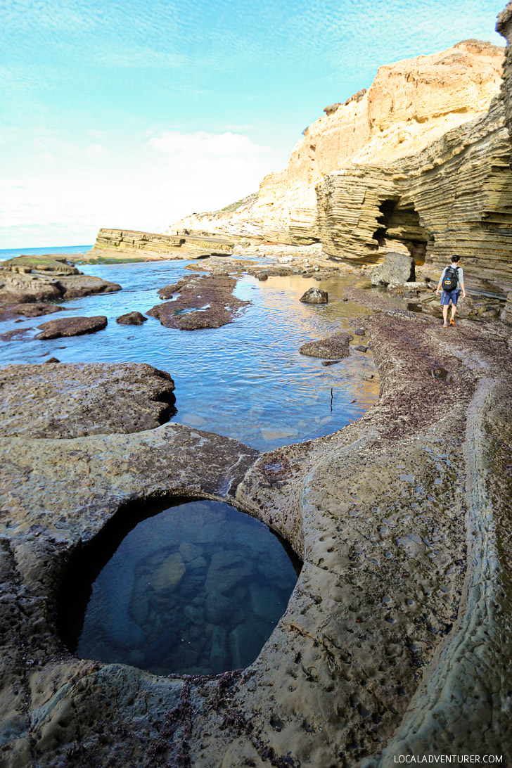 Tide Pooling at Cabrillo National Monument San Diego.