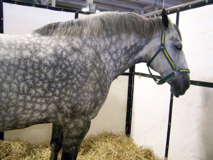 Monochrome horse