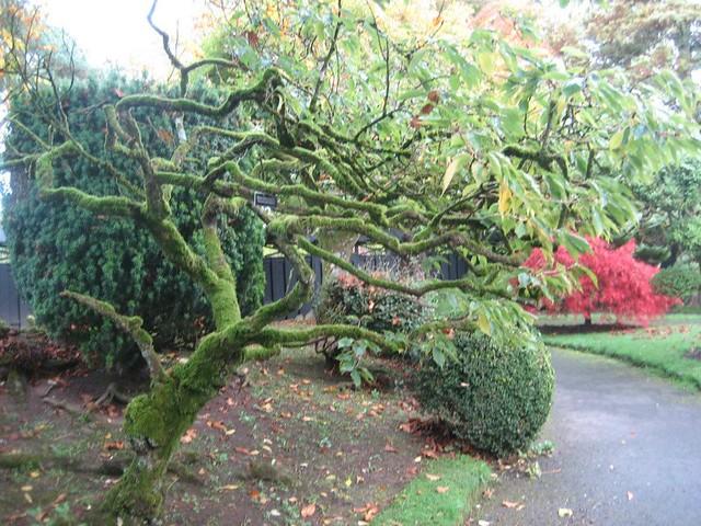 Kildare Japanese gardens