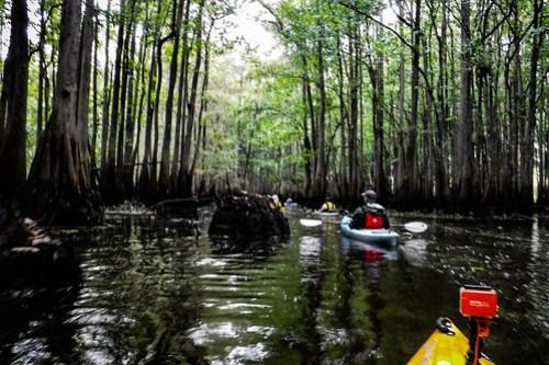 Sparkleberry Swamp with LCU-35