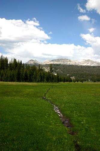 Narrow path through meadow