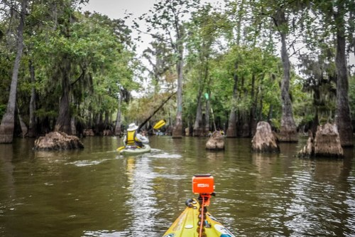 Sparkleberry Swamp with LCU-122