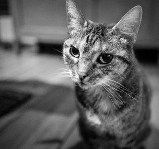 Danie's Cat