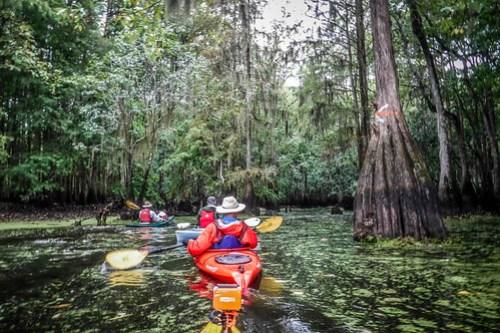 Sparkleberry Swamp with LCU-31