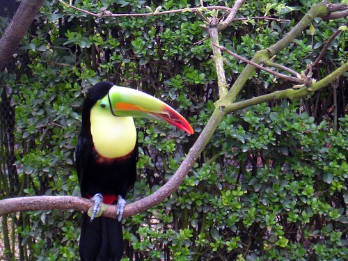 Yep, another Toucan