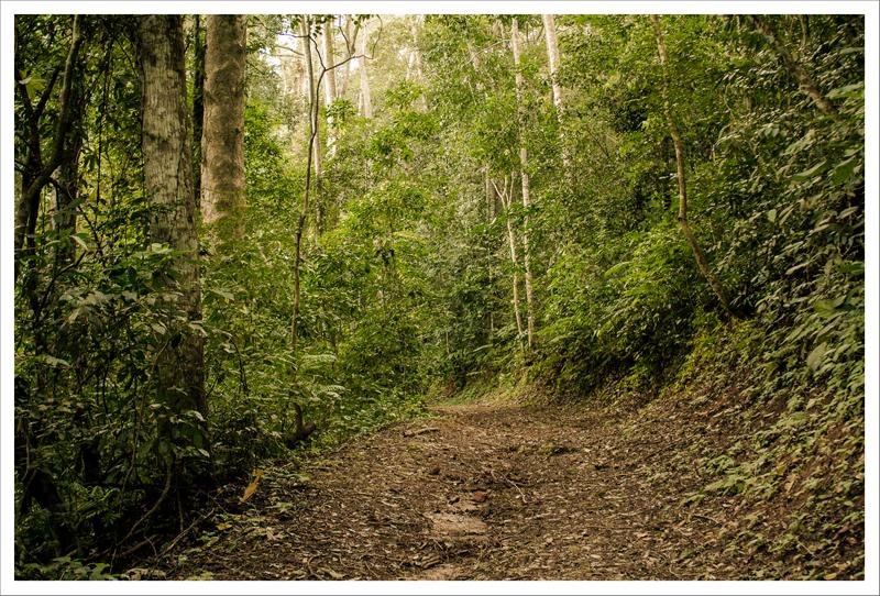 Caminos del bosque