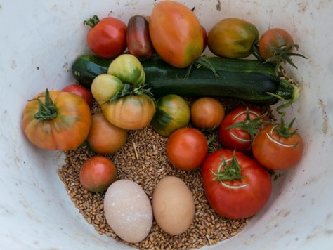 Harvesting in 5 minutes