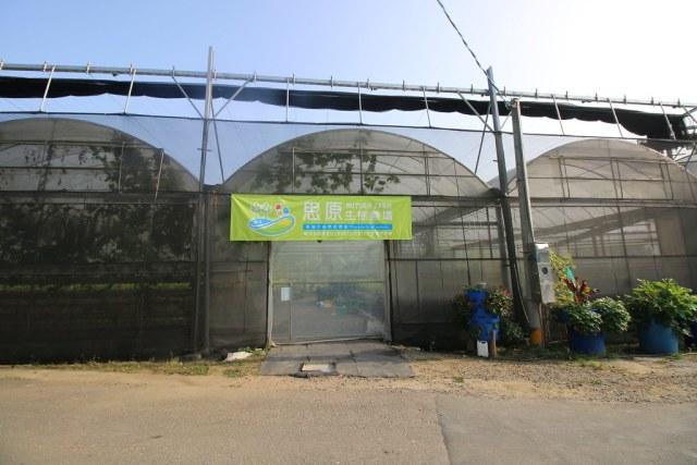旗山思原魚菜共生農場  (1)