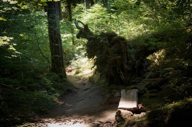 McKenzie Trail