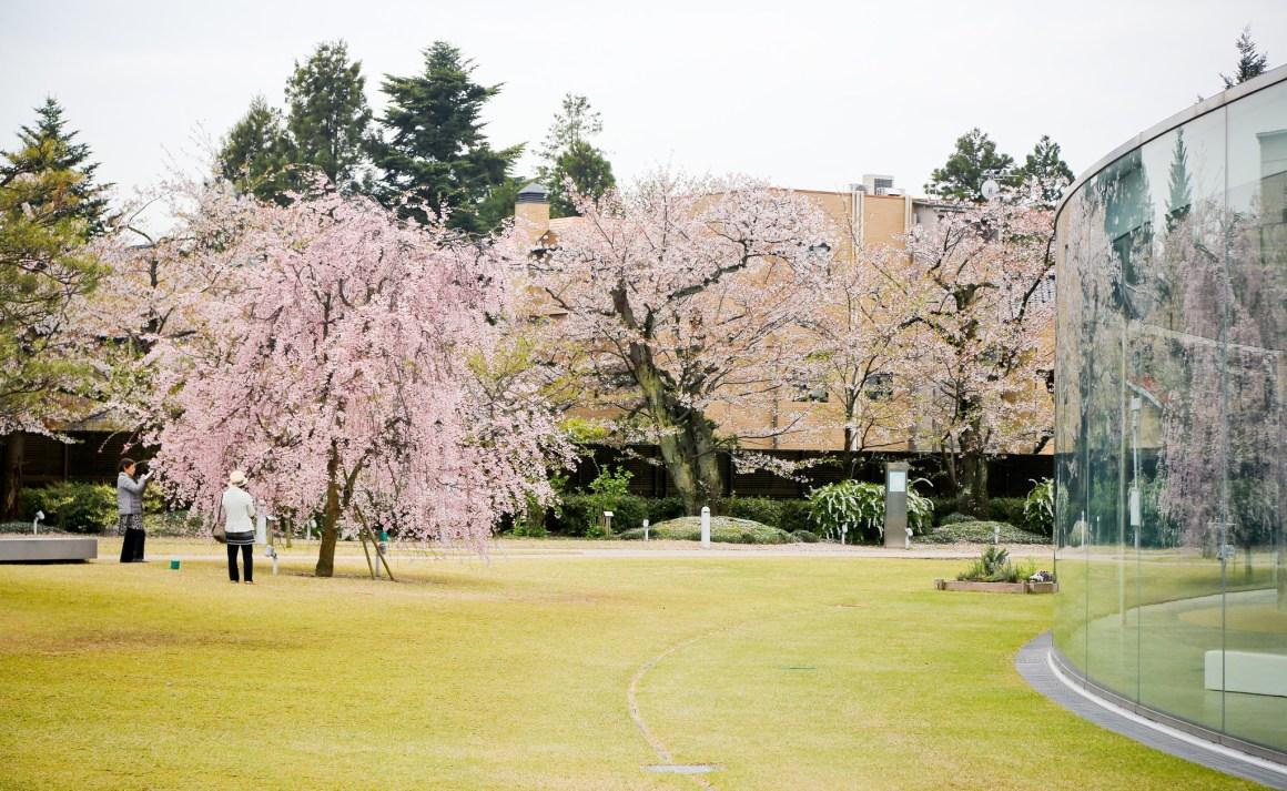 2020年日本櫻花開花預測 金沢21世紀美術館 (妹島和世 + 西澤立衛)