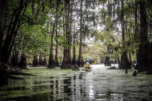 Sparkleberry Swamp with LCU-133