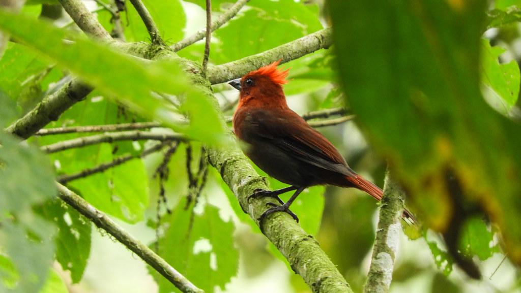 Colombia_BirdFair_2017_213