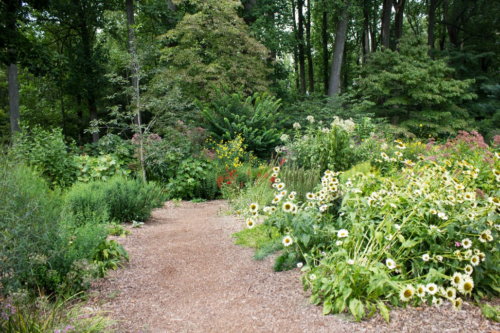 mt-cuba-gardens-delaware-wildflower-path-2