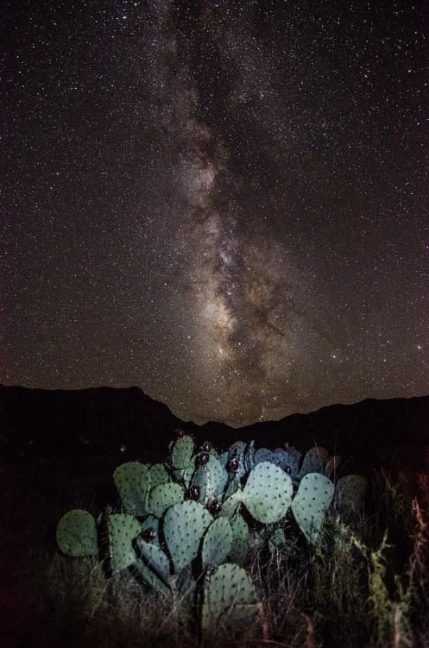 Milky Way Cacti
