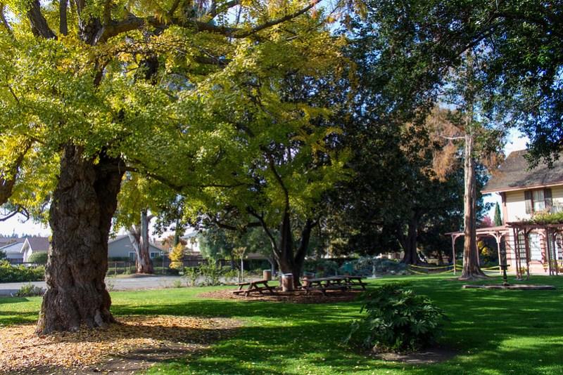 11.21. Shinn Park and Arboretum