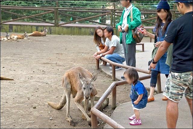 《靜岡縣東部/親子遊推薦景點》日本最大野生動物園~富士野生動物園 @ 魔鬼甄與天使嘉 :: 痞客邦