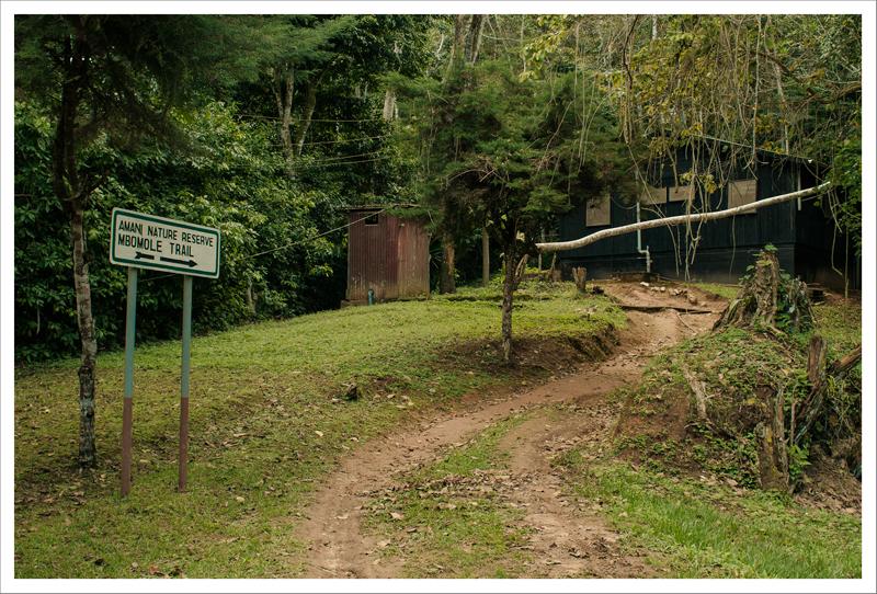 Camino al bungalow
