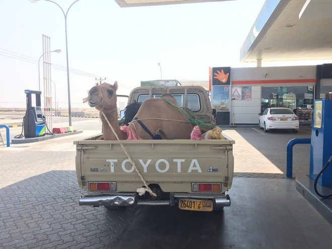 Camel on the go