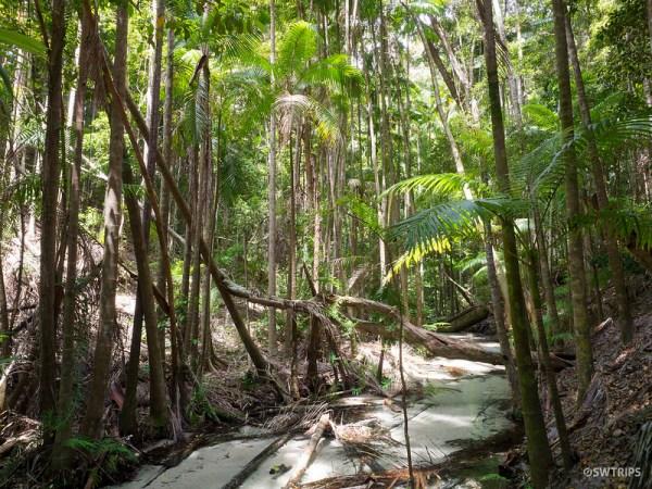 Pine Valley, Fraser Island