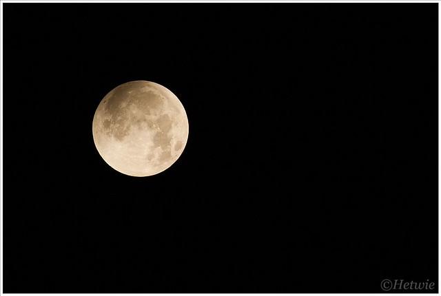 volle maan (7D031964)