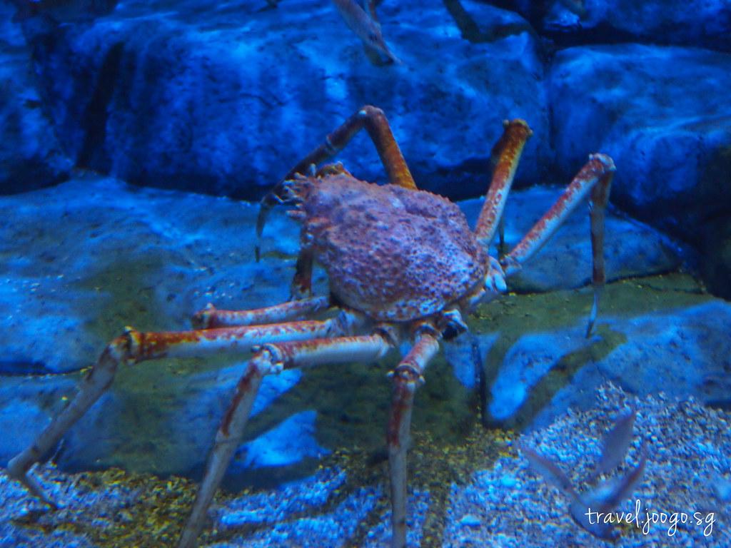 travel.joogo.sg - SEA Aquarium 17