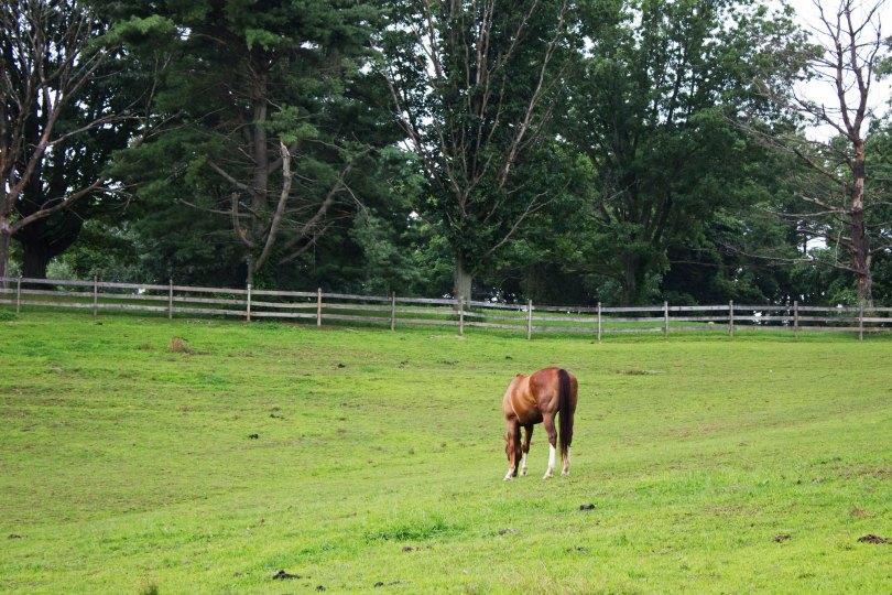 Ridley Creek Horse Farm-004