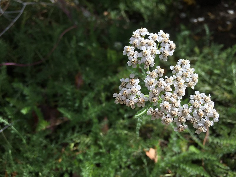 texture_flower