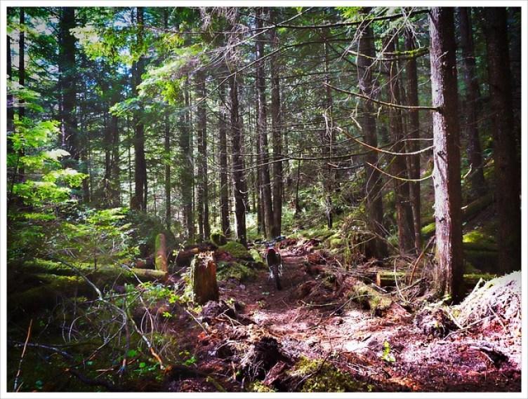 Little Bike....Big Forest (247/365)