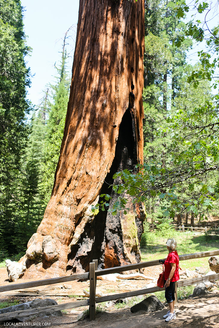 General Grant Tree (15 Amazing Things to Do in Kings Canyon National Park + Sequoia).
