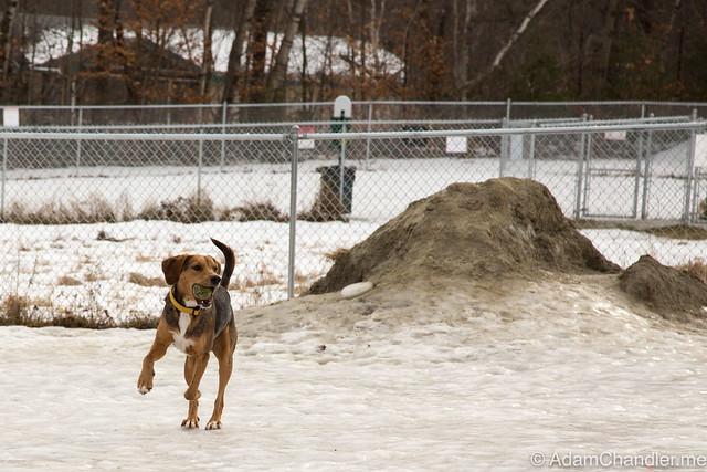 Porter @ The Dog Park (1-14-2017)