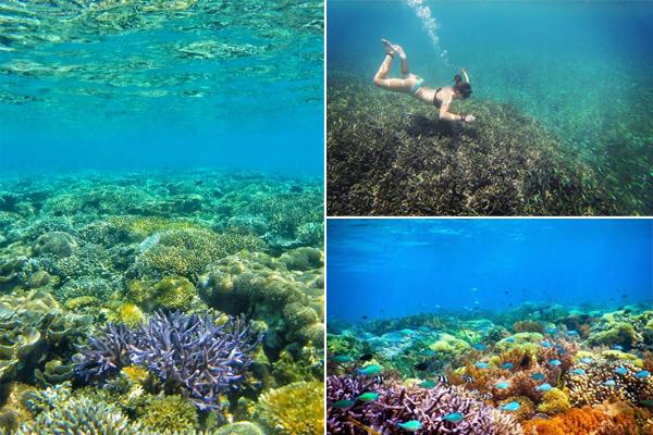 Underwater Gili Layar