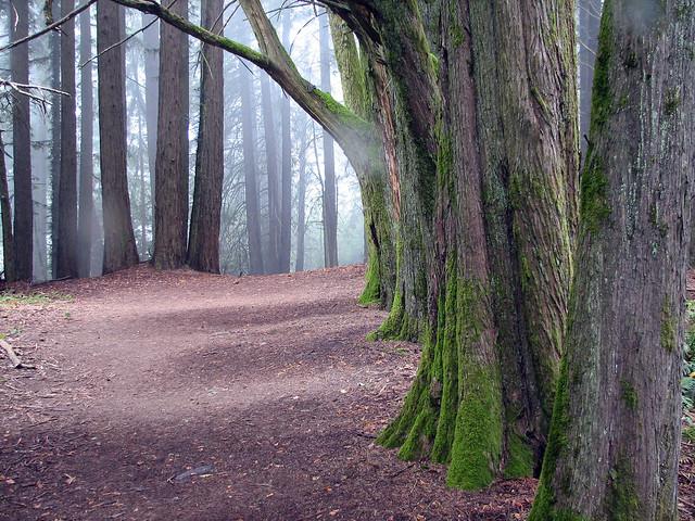 Redwood Peak Trail, Oakland, CA