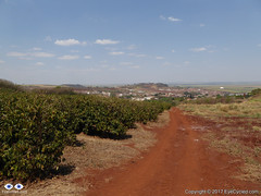 Coffee Plantation on the left and the small town of Dumont in the background