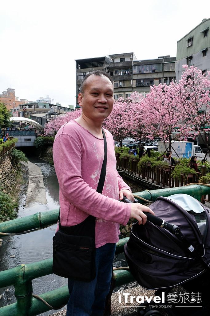 土城赏樱景点 希望之河左岸樱花 (25)