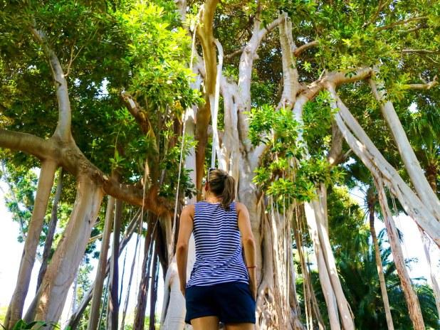 Jardín Botánico en Puerto de la Cruz