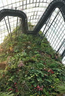 Cloud Forest, Gardens By The Bay, Singapore