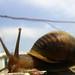 snail-survivor