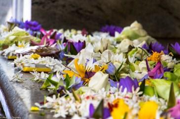 lust-4-life travel blog Sri Lanka Jaya Sri Maha Bodhi-15 anuradhapura