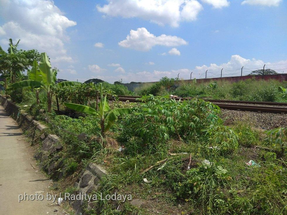 Foto Jalur Rel Mati Bandung (Kiaracondong-Karees): Rel Tertutup Tanaman #1