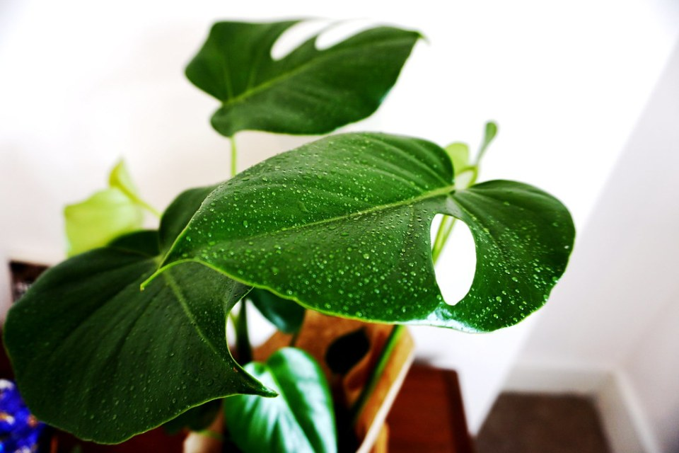 house_plant